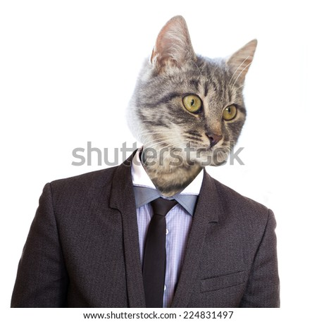 Portrait of a business cat isolated on white background. - stock photo