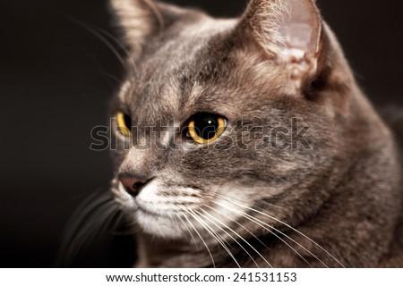 Portrait of a cat face muzzle - stock photo