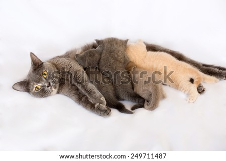 Portrait of a cat family - stock photo