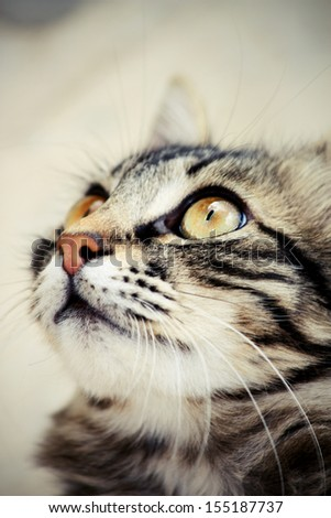 Portrait of a cat that looks up - stock photo