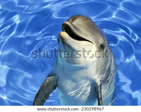 Portrait of a common dolphin  - stock photo