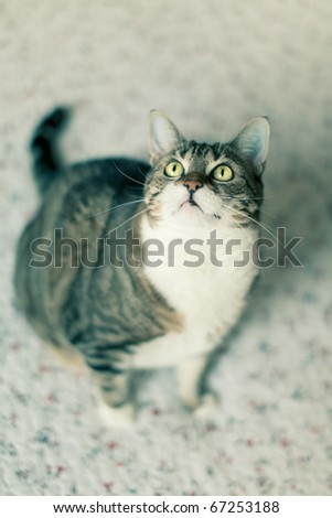 Portrait of a common european house cat - stock photo