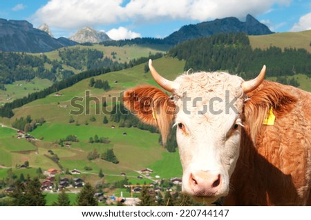 Portrait of a cow in an alpine meadow - stock photo