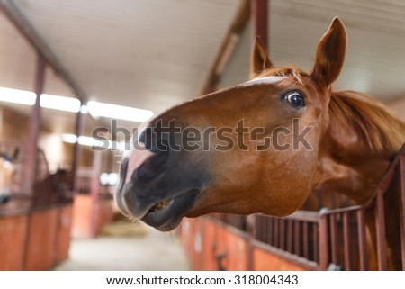 Portrait of a curious horse in a stable - stock photo