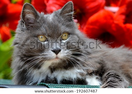 Portrait of a cute cat lying down on a garden chair and enjoying a beautiful day outdoors/Purrfection/ - stock photo