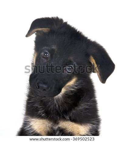 Portrait of a cute one-month-old German shepherd puppy (isolated on white) - stock photo