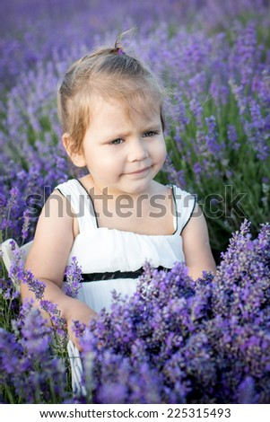 portrait of a cute toddler girl lavender field - stock photo