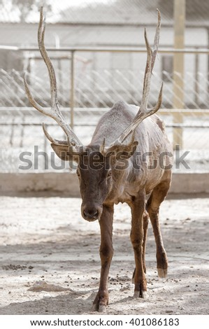 Portrait of a deer in nature - stock photo