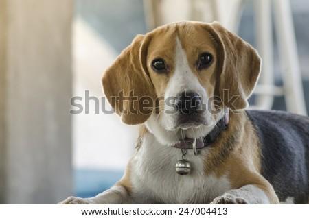 Portrait of a dog - stock photo