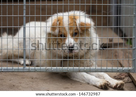portrait of a dog behind bars - stock photo