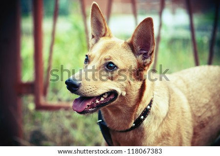portrait of a dog with a collar - stock photo