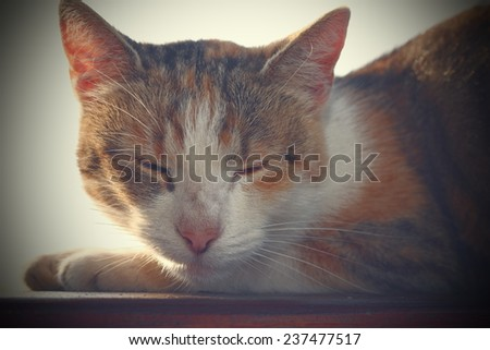 portrait of a domestic lazy cat while resting, with vintage effect, instagram - stock photo