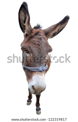 Portrait of a donkey - stock photo