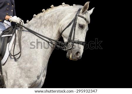 Portrait of a dressage horse on black background. - stock photo