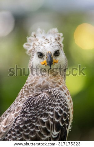 Portrait of a eagle symbol the hunting - stock photo