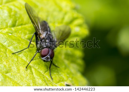 Portrait of a fly - stock photo