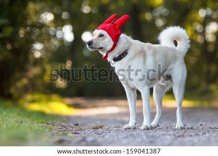 portrait of a funny dog - stock photo