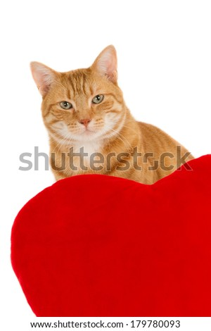 Portrait of a ginger cat behind a red heart pillow, isolated on white - stock photo