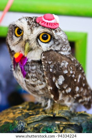 Portrait of a great horned Owl - stock photo