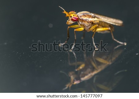 Portrait of a Horse-fly - stock photo