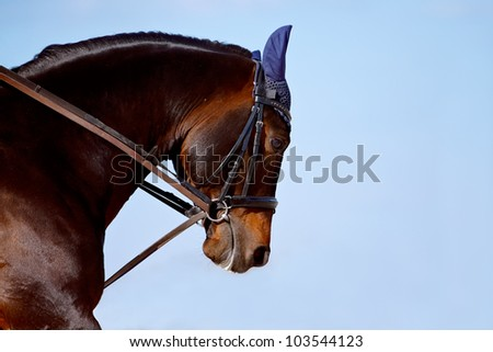Portrait of a horse in a bridle against the sky - stock photo