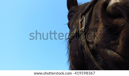 portrait of a horse on a background of blue sky, big muzzle in front, Suitable as a banner on the web - stock photo