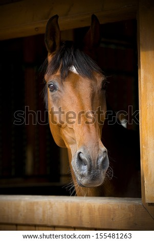 portrait of a horse on a dark background - stock photo
