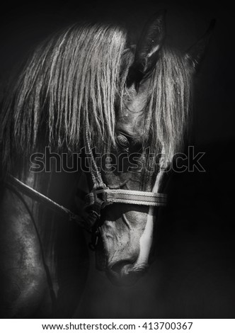 Portrait of a horse on black background - stock photo