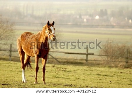 Portrait of a horse standing in the field in the rays of the setting sun. - stock photo