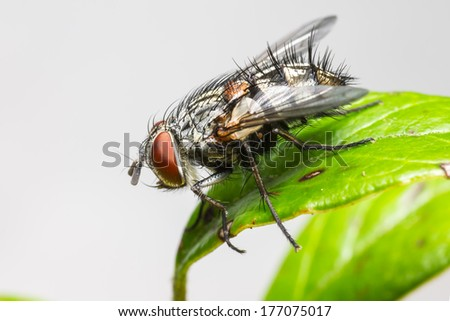 Portrait of a house fly - stock photo