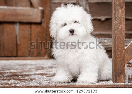 Portrait of a little dog - stock photo