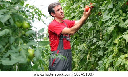 Portrait of a man at work in greenhouse. - stock photo
