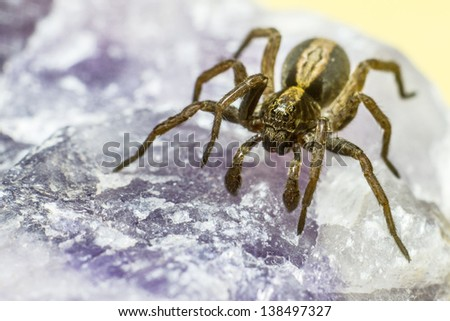 Portrait of a mineral spider - stock photo