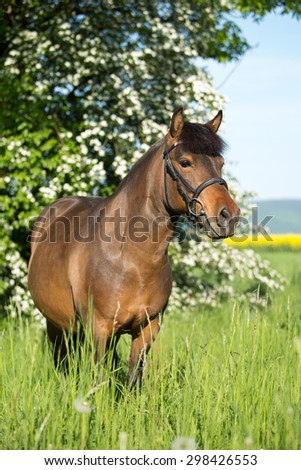 Portrait of a nice sports pony - stock photo