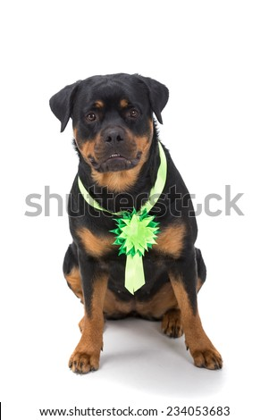 Portrait of a purebred rottweiler in front of white background. - stock photo