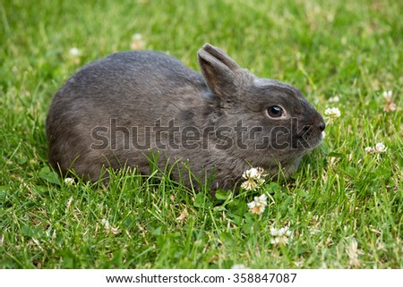 Portrait of a rabbit in the meadow - stock photo