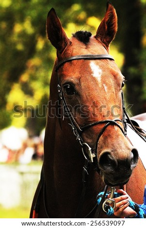 Racehorse stock photos images pictures shutterstock for Thoroughbred tattoo lookup