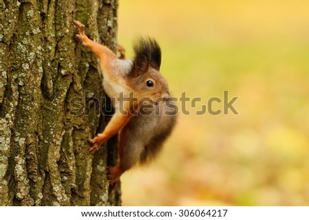 Portrait of a red squirrel sitting on a tree - stock photo