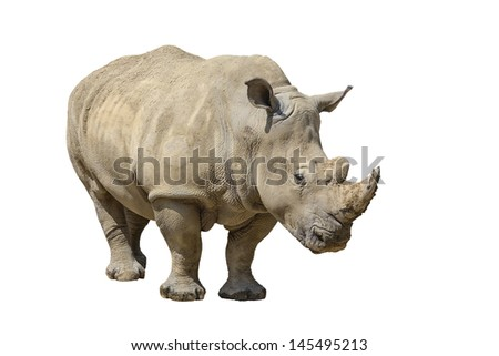 portrait of a rhinoceros isolated on white background with copy space for your text - stock photo