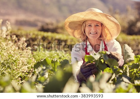 Portrait of a senior woman smiling at the camera wearing a straw hat, and surrounded by the fresh green leaves of many plants in her vegetable garden, with greenery in the background - stock photo