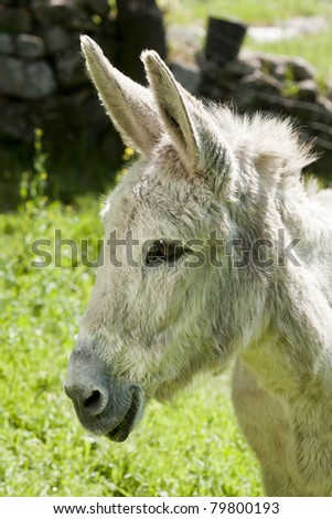Portrait of a Smilling Donkey on the country-side - stock photo
