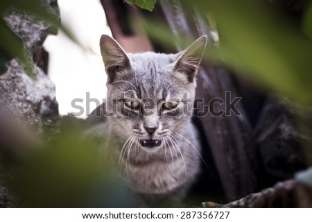 Portrait of a smoke colored cat. - stock photo