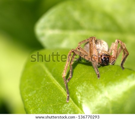 portrait of a spider in nature. macro - stock photo