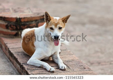 Portrait of a stray dog outdoors - stock photo
