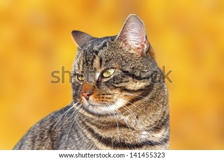 portrait of a striped cat over beautiful autumn forest background - stock photo