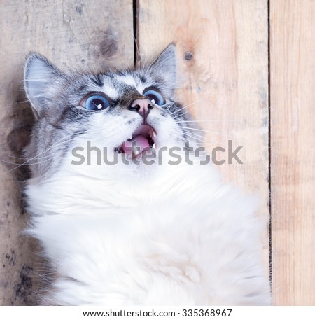 Portrait of a surprised cat looking up - stock photo