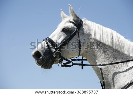 Portrait of a thoroughbred horse on blue sky background - stock photo