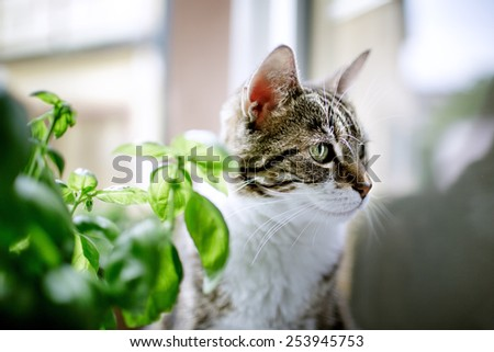 Portrait of a Three-Colored common Housecat - stock photo