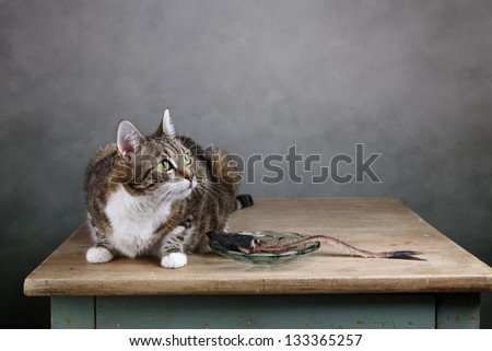 Portrait of a three colored housecat sitting on table with an eaten herring - stock photo