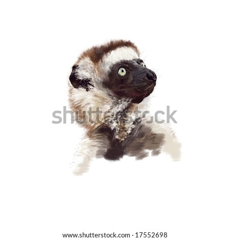 Portrait of a Verreaux's Sifaka (Propithecus verreauxi verreauxi). Genuine high resolution digital artwork - suitable for print. Not a scan! - stock photo